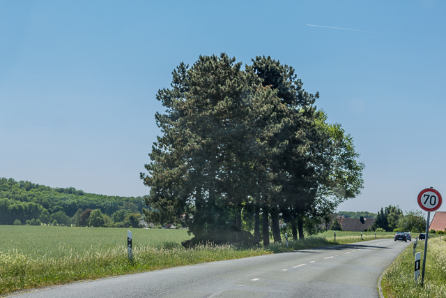 Approaching a clump of trees where dolmens are hiding.