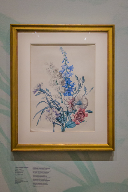 Another watercolor by x. More than 100 of the prints in Les Roses are of roses in Joséphine's garden.