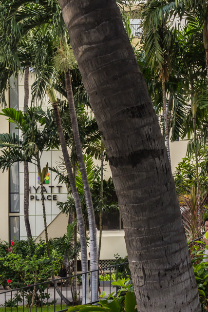 The Hyatt Place is on Paoakalani and Cartwright Streets.