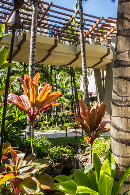 Ti plants are featured in the landscaping of the Royal Hawaiian Center.