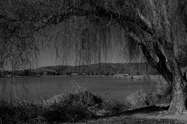 Lake Elizabeth in Fremont, California.