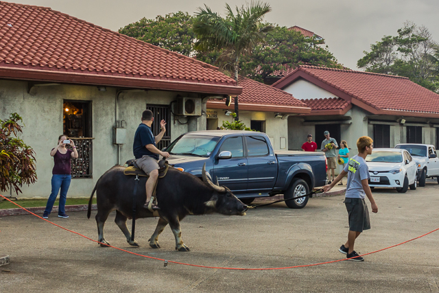 If you get there early you can ride on a carabao! They start cooking around 2. People start coming around 5. If  you get there late you may have trouble finding a parking spot!