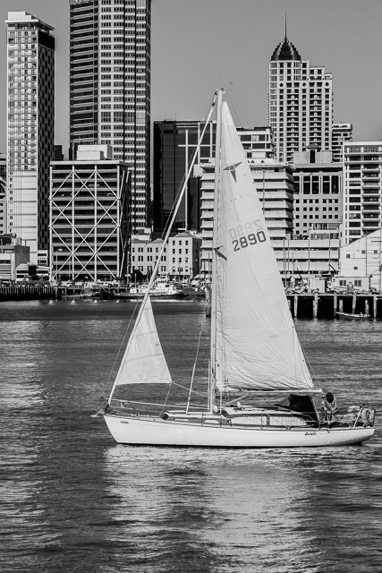 Sailboat and Auckland skyline from the Devonport ferry.