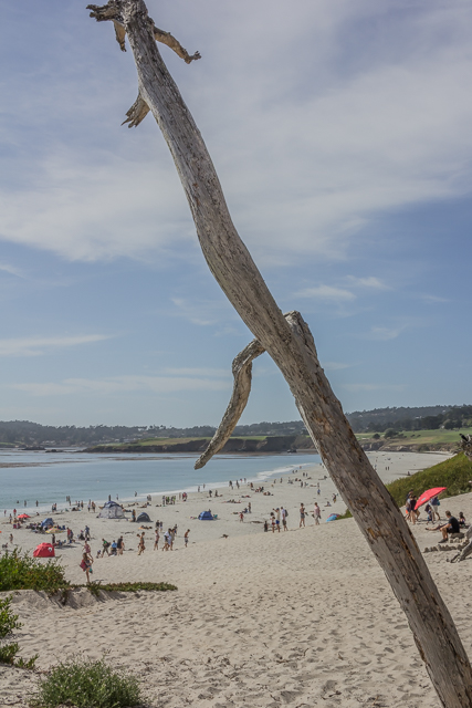 Carmel Beach looking north from end of Ocean Avenue. Pebble Beach golf course is in the background.