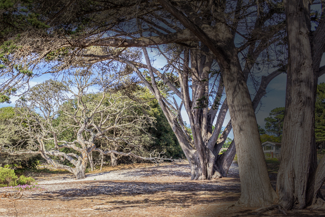 Wooded area at end of Ocean Avenue.