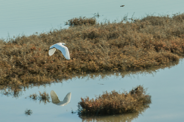 I shot this snowy egret at Heron Bay in January 2009.
