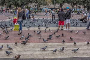 Back to the pigeons of Placa de Catalunya and the end of our bus tour.