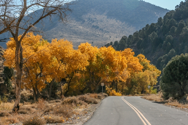 Six Mile Canyon in color. The cottonwood trees turn orange in October. That's Flowery Peak (elevation: 6581ft) in the background.