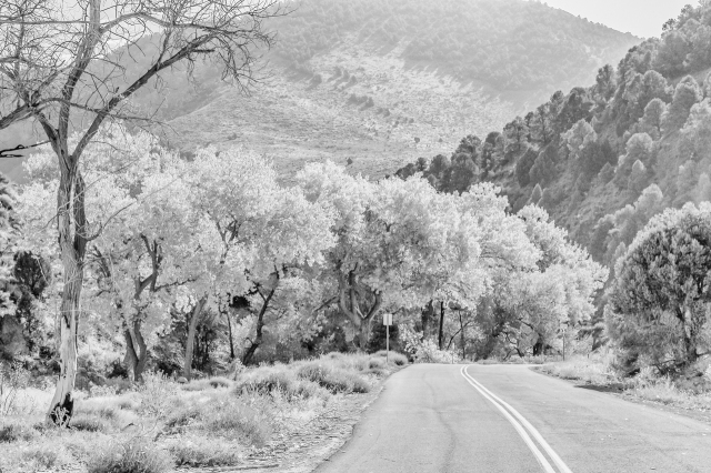 State Route 79 is the back road that runs from Virginia City through Six Mile Canyon to Dayton Valley and Highway 50. I used the high key preset in Nik Silver Efex Pro to turn the orange cottonwood leaves to silver.